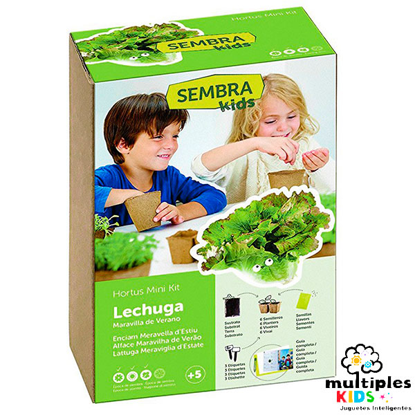 Mini kit lechuga